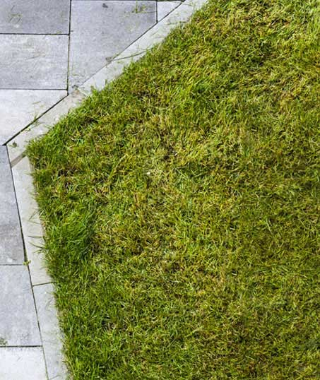 U.S. Green Pros a division of AKA Landscapes Lawn Dethatching