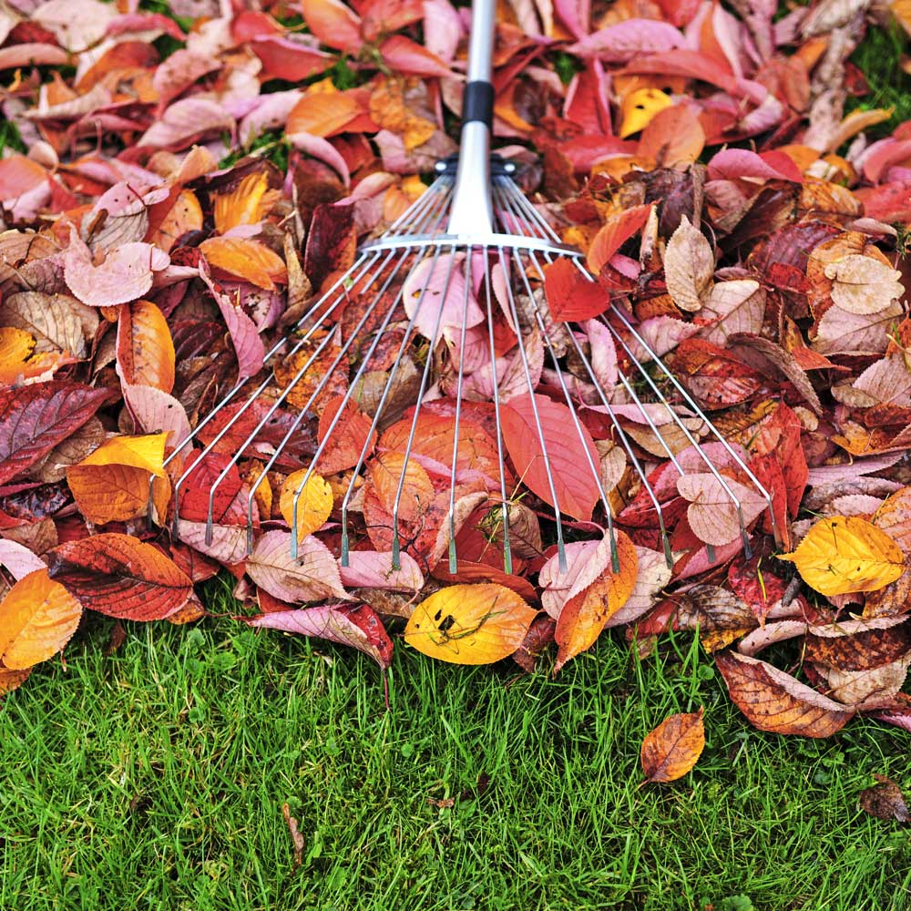 Fall Clean Up Service
